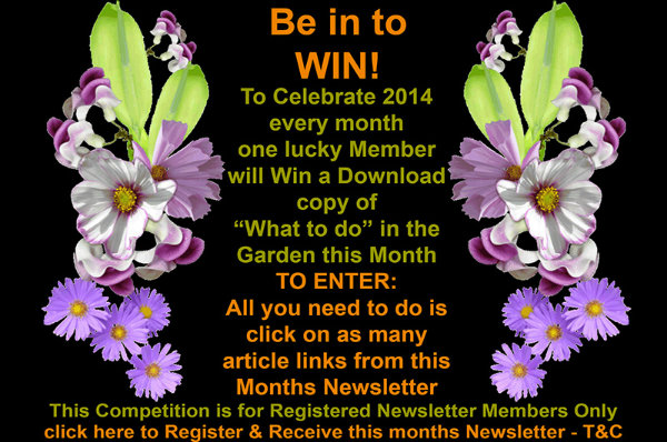 competition-ad-text-02-600x398