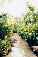 toorak jungles 06-153x230
