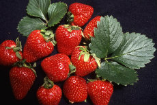 strawberries 01-230x153