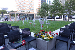ANZ Field of Remembrance